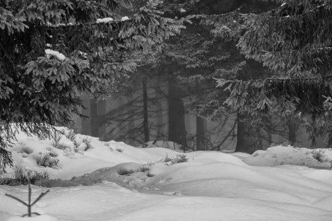 Harz Wandelen Winterwandelen Wandelen Achtermann Braunlage