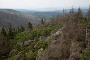 Harz Hiking Goethe