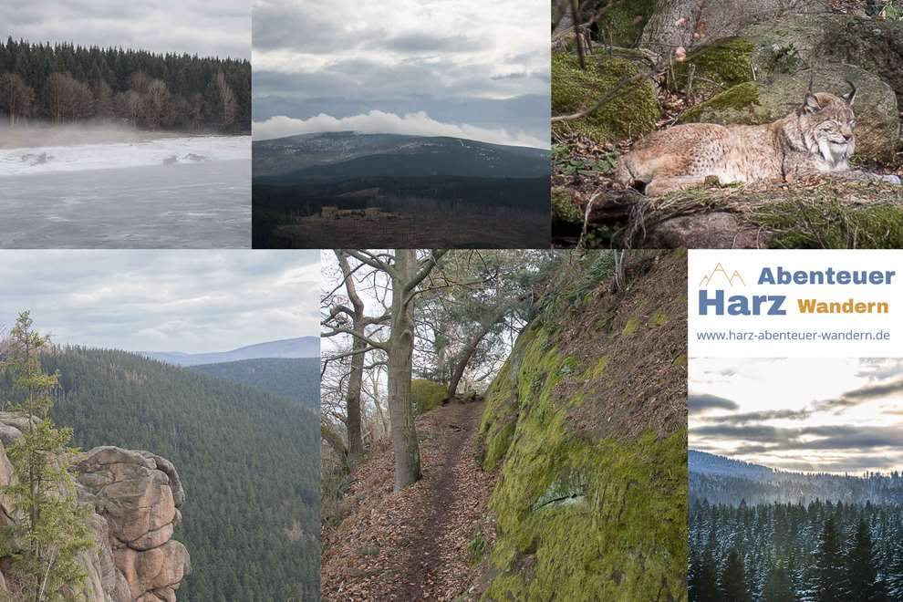 Holidays with kids in the Harz Mountains