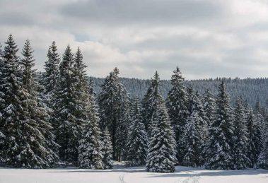 foto's van hars - Oberharz