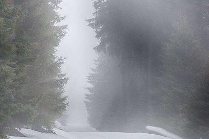 Harz Fotos - Auf dem Weg zum Brocken - Nebel im Harz