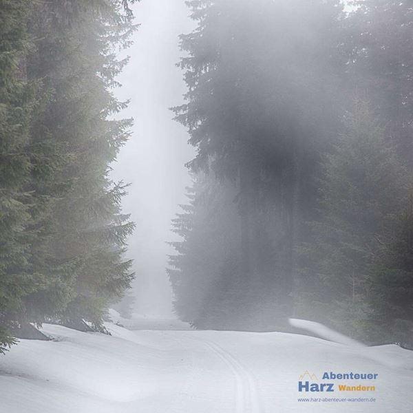 Harz Foto's - Op weg naar Brocken - Mist in het Harz gebergte