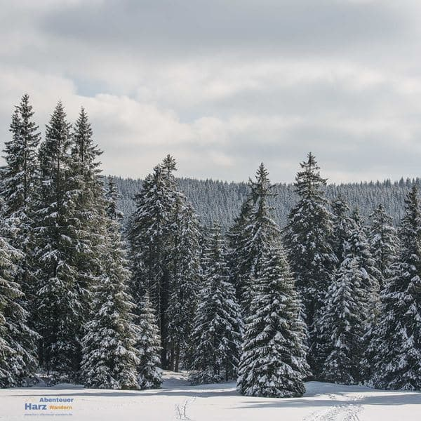 Harz Photos - Winter in the Oberharz