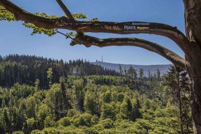 Ilsenburg Harz Fotos - Blick auf den Brocken
