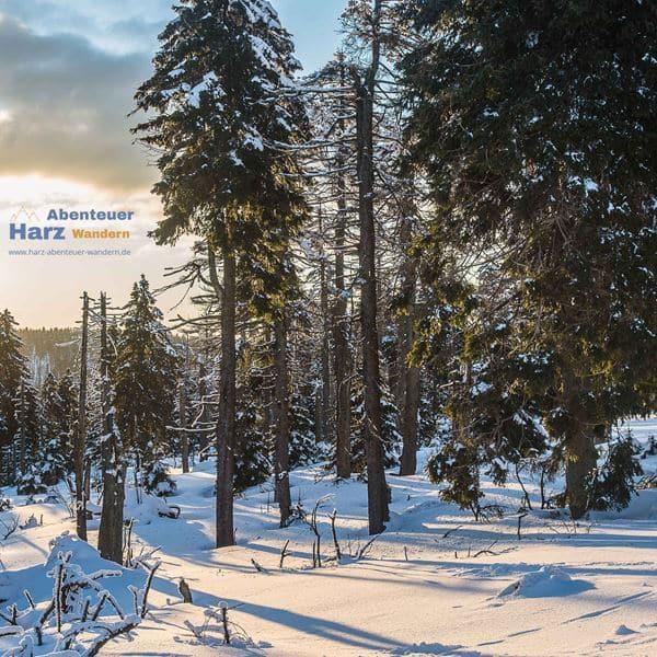 Wandelen in het Harzgebergte - Harz Foto's - Brockenfeld