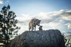 Vakantie met hond in de Harz